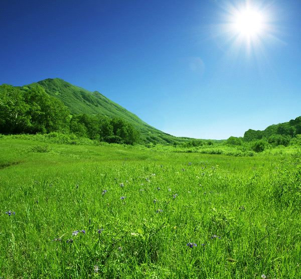 The Average Sunlight of the Grassland Biome  Sciencing